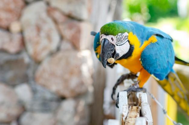 Marcow-papagei, gemusterter hintergrund, verwischt