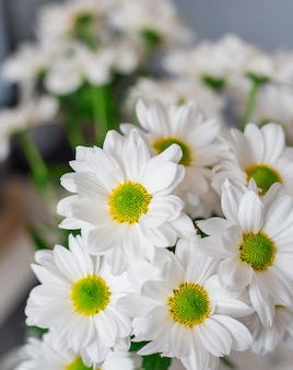 Marguerite gänseblümchen, auch bekannt als argyranthemum frutescens, natur und romantische dekoration