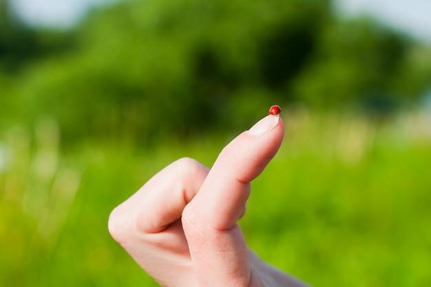 Marienkäfer am finger