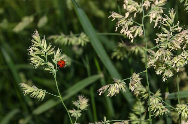 Marienkäfer sitzt auf einem grünen pflanzenspross.