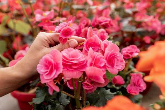 Marktblumenkonzept mit floristennahaufnahme