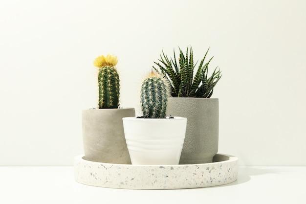 Marmortablett mit sukkulenten auf weißer oberfläche. zimmerpflanzen