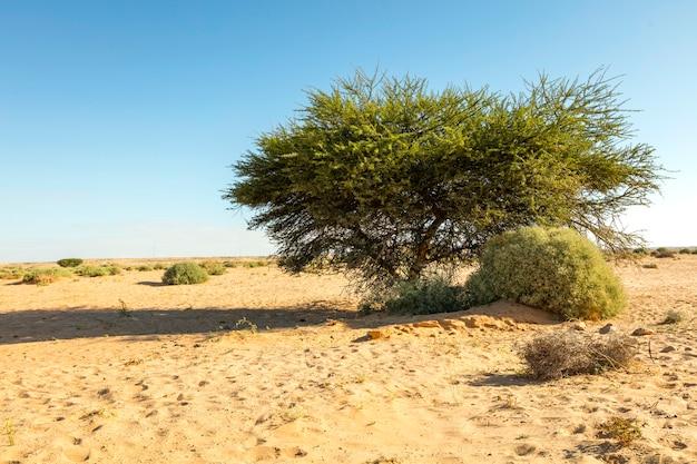Marokkanische wüstenlandschaft mit blauem himmel. marokko
