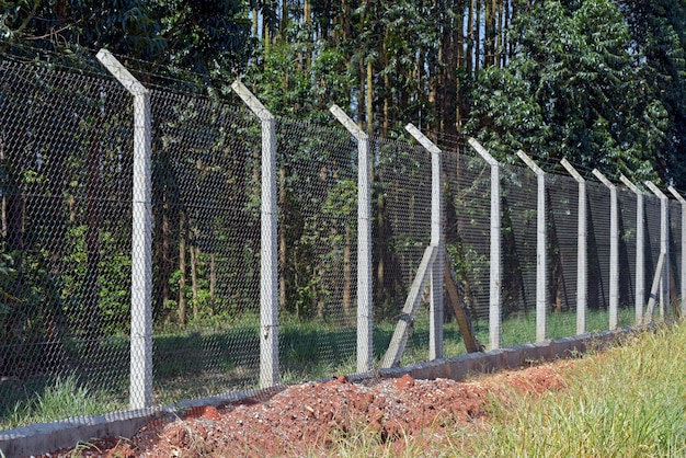 Maschendrahtzaun mit betonpfosten auf eukalyptusplantage
