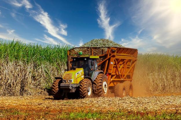 Maschinenernte zuckerrohrplantage