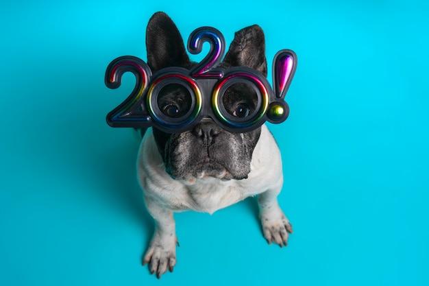 Maskottchen der französischen bulldogge mit bunten gläsern für den text 2020 lokalisiert auf blauem hintergrund. konzept zum jahresende. luftaufnahme