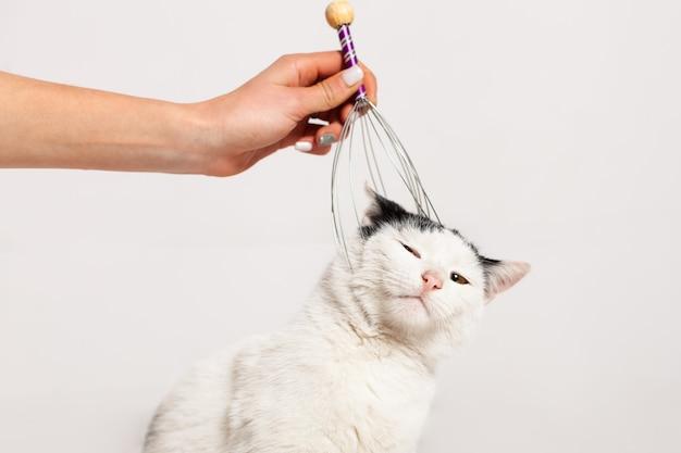 Massieren sie den kopf und den nacken der katze