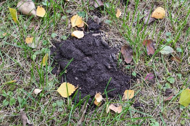 Maulwurfshügel im herbstgarten, nahaufnahme