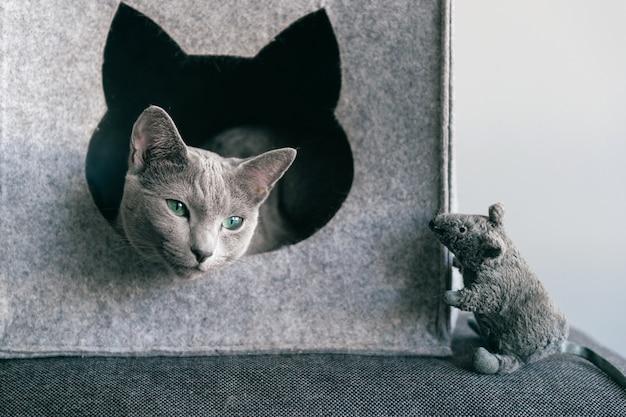 Maus und katze spielen
