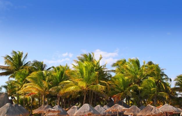 Mayaniviera tropischer blauer himmel der schiebedach-palmen