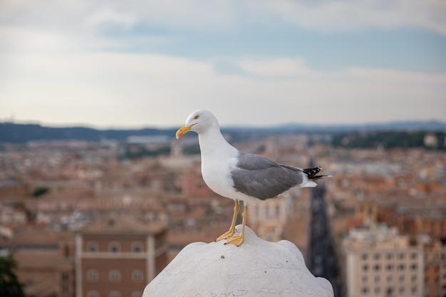 Mediterrane möwensitzplätze auf dem dach von vittoriano in rom, italien. sommerhintergrund mit sonnigem tag und blauem himmel