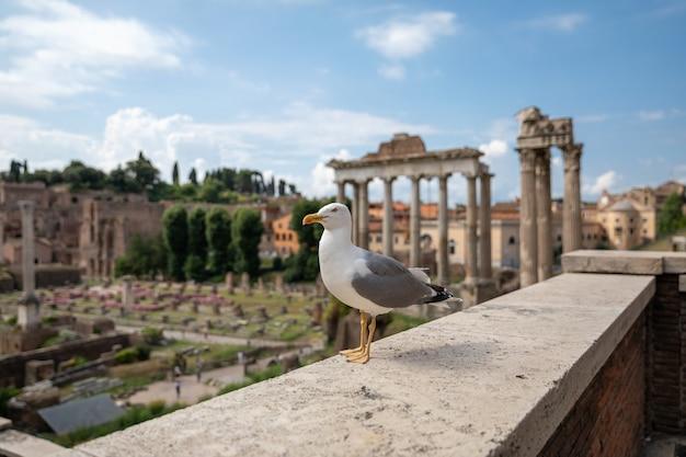 Mediterrane möwensitzplätze auf steinen des forum romanum in rom, italien. sommerhintergrund mit sonnigem tag und blauem himmel