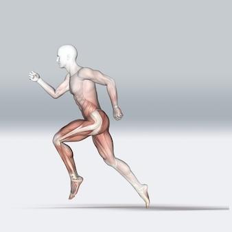 Medizinische 3d-figur in laufender pose mit muskelkarte