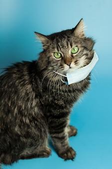 Medizinische maske für katzenvirus-geschützte katze zu hause
