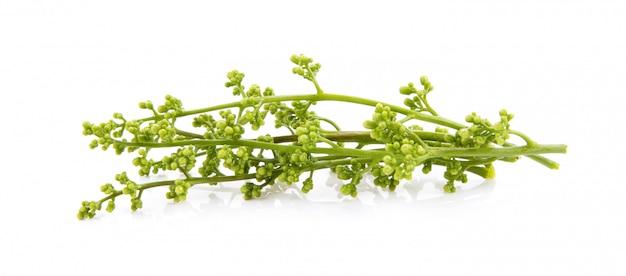 Medizinische neemblume über weiß