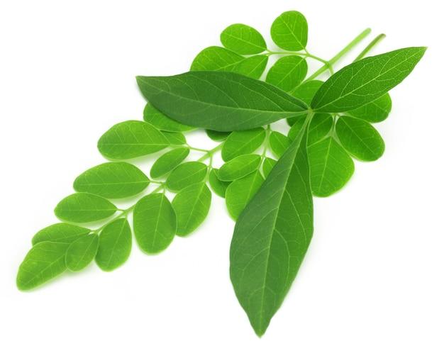 Medizinische vitex negundo mit moringa-blättern auf weißem hintergrund