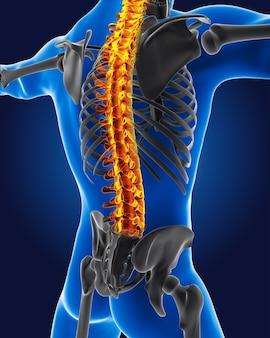 Medizinischer 3d-mann mit hervorgehobener skelettwirbelsäule