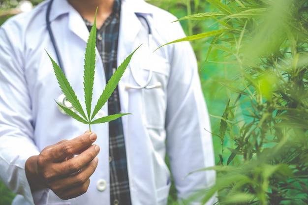 Medizinisches marihuana, alternatives kräutermedizinkonzept