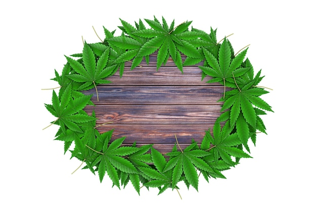 Medizinisches marihuana oder cannabis hanfblätter um grungewooden board mit freiem platz für ihr design auf weißem hintergrund. 3d-rendering