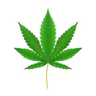 Medizinisches marihuana oder cannabis hanfblatt auf weißem hintergrund. 3d-rendering