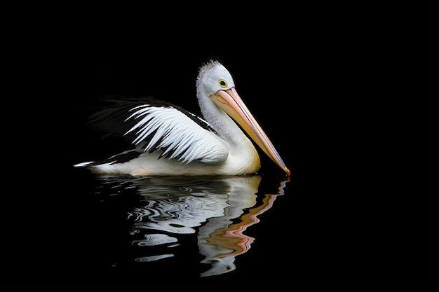Meer pelikane birds australia conspicillatus