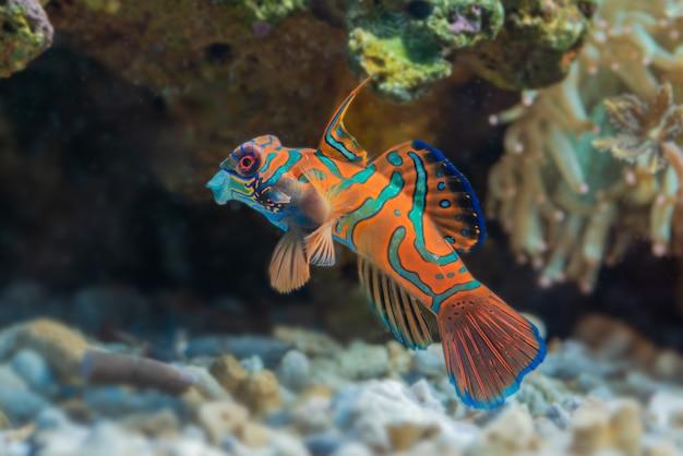 Meeresfische und wunderschöne korallen