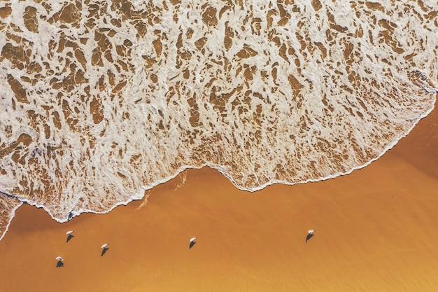 Meereslandschaft. möwen an einem sandstrand. ansicht von oben. sand und meereswellen abstrakter naturhintergrund