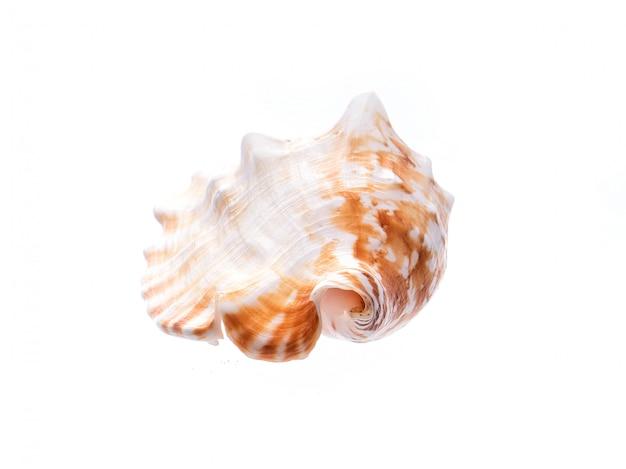 Meeresnatürliches oberteil, ursprüngliches muster des meeresflora und -fauna. sicherheitsunterstand für weißes isolat der mollusken und der krebstiere.