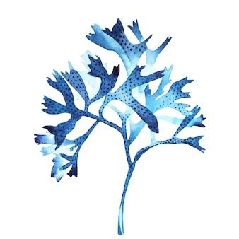 Meerespflanzenseelebengegenstand lokalisiert auf weißem hintergrund. gemalte illustration des aquarells hand gezeichnete.