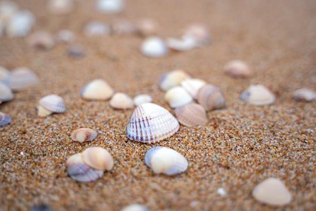 Meereswelle, die von kleinen muscheln in skane, schweden zur küste läuft