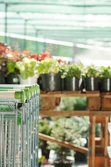 Mehrere einkaufswagen und schwarze blumentöpfe mit einheimischen pflanzen, die in reihen in einem großen modernen supermarkt für gartenliebhaber stehen