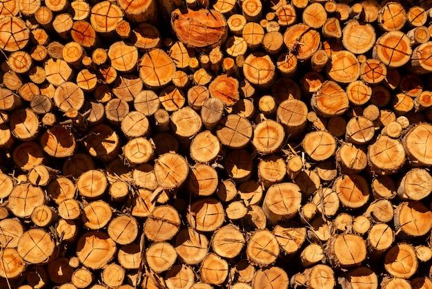 Mehrere eukalyptusstämme, die in der sonne getrocknet und zur verwendung in holzöfen gestapelt wurden