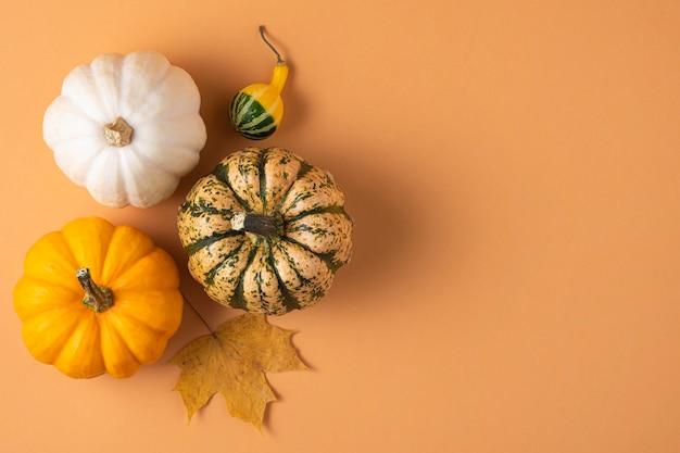 Mehrere kleine dekorative bunte kürbisse und ahorn auf einer orange.