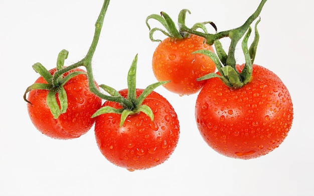 Mehrere reife rote tomaten mit grünen zweigen in wassertropfen