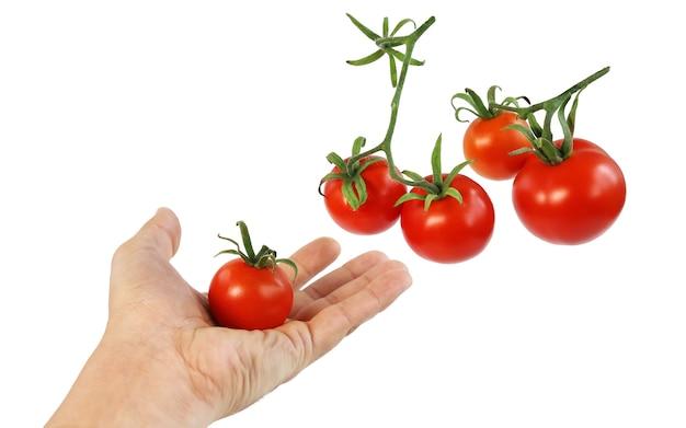Mehrere reife rote tomaten und hand hält eine tomate