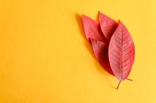 Mehrere rote gefallene herbstkirschblätter auf einem gelben papierhintergrund liegen flach