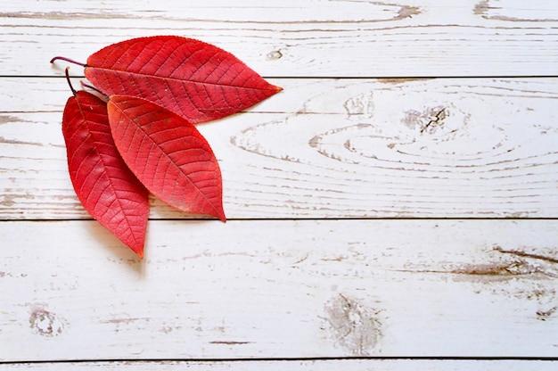 Mehrere rote herbstblätter auf hellen holzbrettern