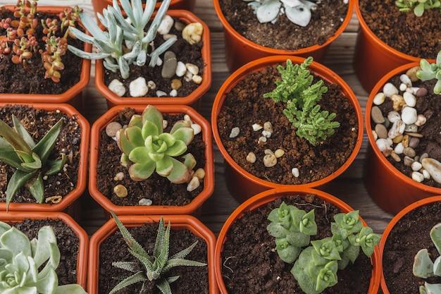 Mehrere succulents in kleinen töpfen auf einem holztisch