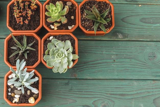 Mehrere sukkulenten in kleinen töpfen auf einem holztisch