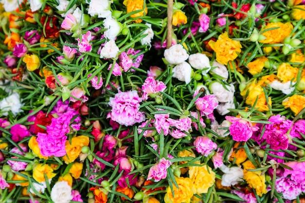 Mehrfarben der portulaca grandiflorablume, die im garten blüht