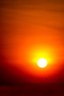 Mehrfarben des sonnenunterganghimmels und des sonnenstrahls ringsum und schattenbildfliegenvögel