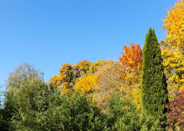 Mehrfarbige rot-gelb-grüne laubbäume, die in der herbstsaison zusammen mit grünen nadelbäumen wachsen