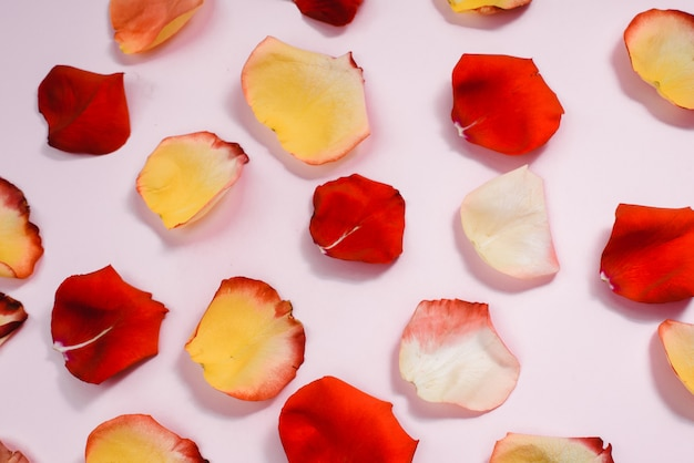 Mehrfarbige rote, gelbe, zarte rosenblätter auf einem rosa pastellhintergrund. flache lage, muster, draufsicht