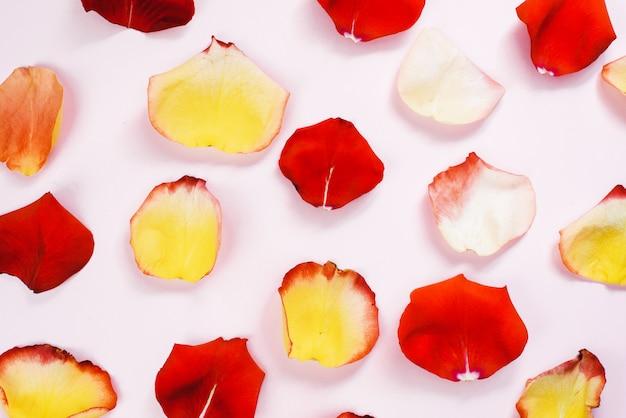 Mehrfarbige rote, gelbe, zarte rosenblätter auf einer rosa pastelloberfläche. flache lage, muster, draufsicht