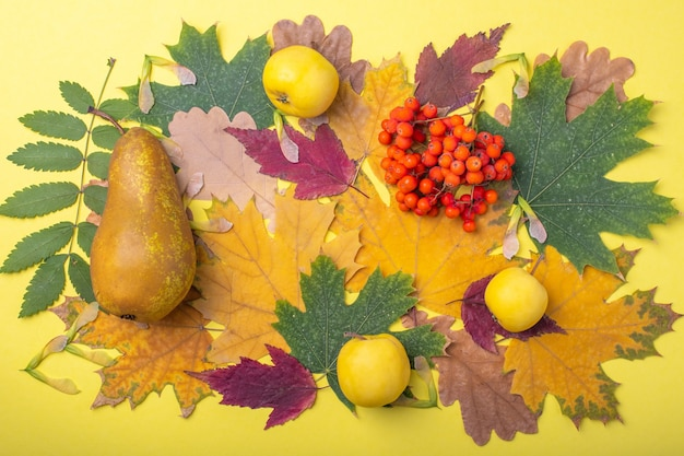Mehrfarbige rote, orange, grüne, trockene herbstblätter, birnen und gelbe äpfel und orangefarbene vogelbeeren auf gelbem hintergrund. ein farbenfrohes bild von gefallenen herbstblättern, ideal für den saisonalen gebrauch