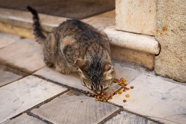 Mehrfarbige straßenkatze frisst katzenfutter auf den straßen der altstadt.