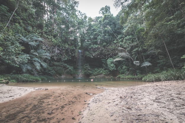 Mehrfarbiger natürlicher pool versteckt im regenwald des nationalparks lambir hills, borneo, malaysia.