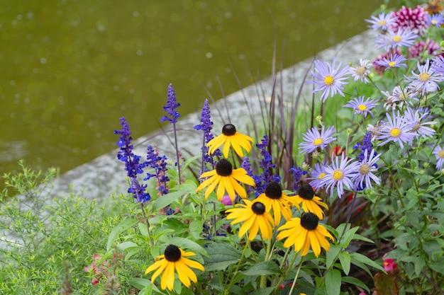 Mehrjähriges blumenbeet mit salbei und rudbeckia im garten. herbstblumen am kanal mit wasser
