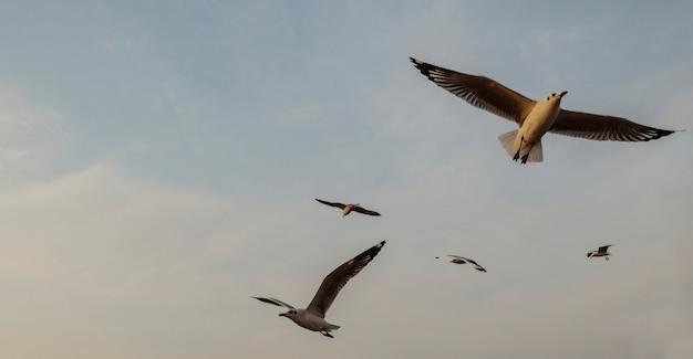 Menge der seemöwen, die in den himmel fliegen