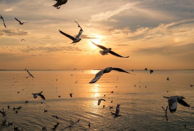 Menge von den seemöwen, die auf seegolf von thailand am abend fliegen